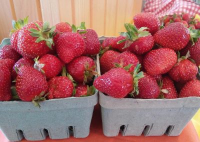 berries01