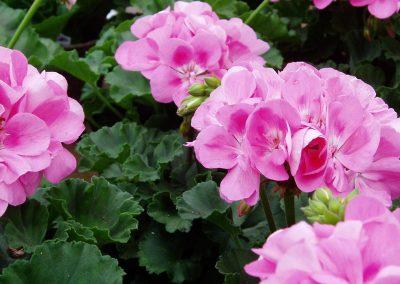 flowers23