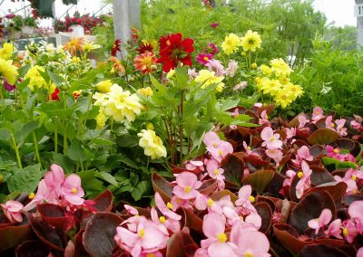 flowers34