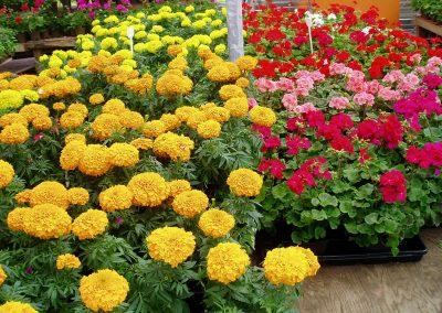flowers36
