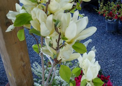flowers42