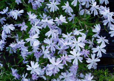 flowers45