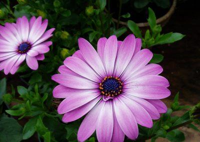 flowers48