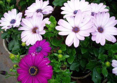 flowers49