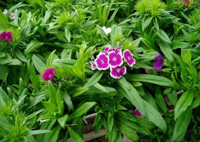 flowers58