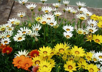 flowers60