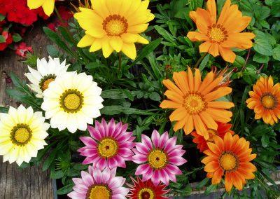flowers62