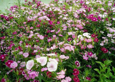 flowers66