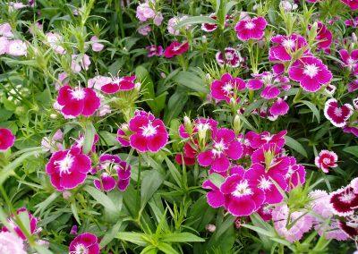 flowers67
