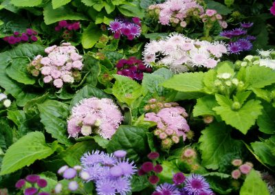 flowers68