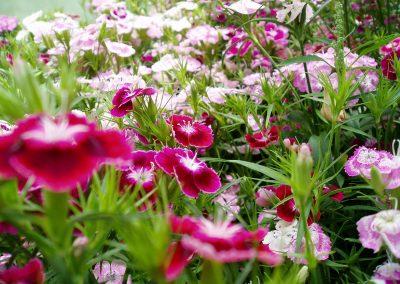 flowers69