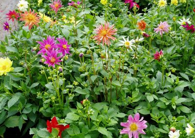 flowers71