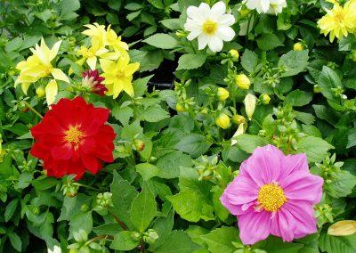 flowers72
