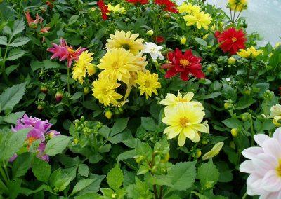 flowers73