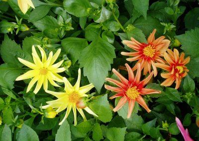flowers75