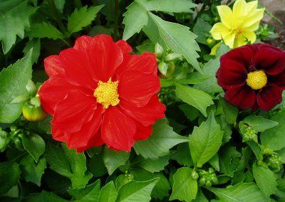 flowers76