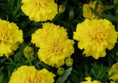 flowers80
