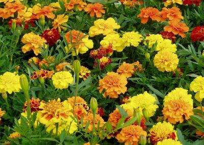 flowers82
