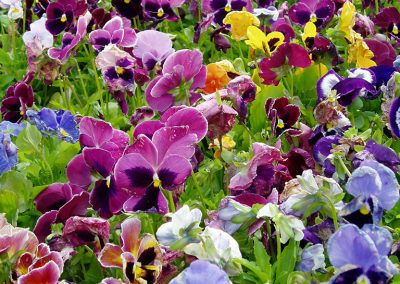 flowers85