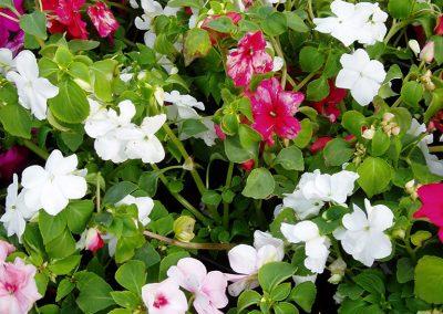 flowers86