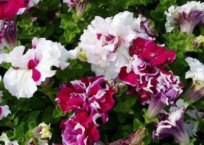 flowers88