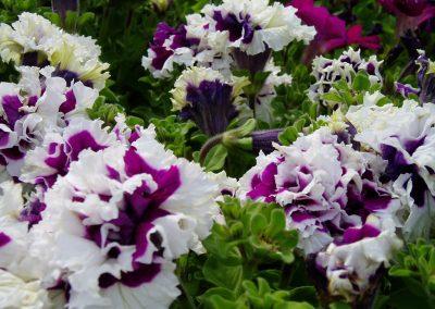 flowers89