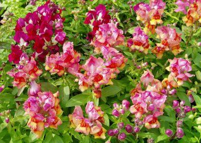 flowers91