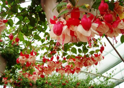 flowers92