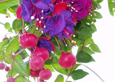 flowers93