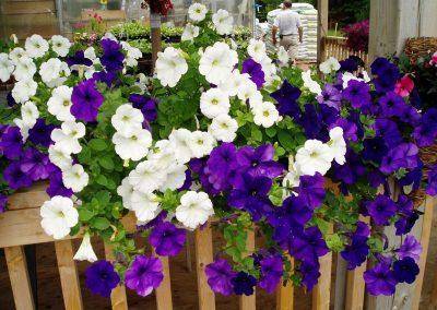 flowers96