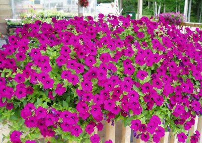 flowers97