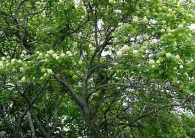 greenery26
