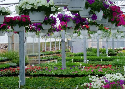 greenhouse04