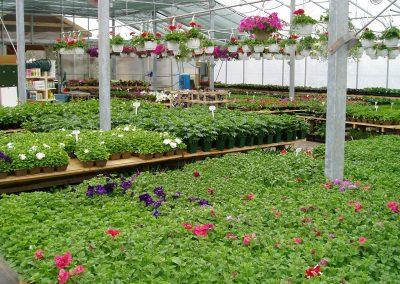 greenhouse05