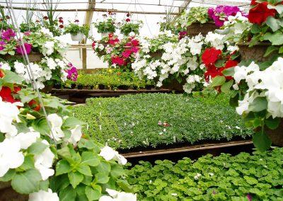 greenhouse07